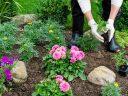 Ültessen csodaszép növényeket és gyümölcsfákat kertészeti webáruházból!