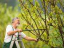 Veszélyes fák kivágása modern eszközökkel, gyorsan és egyszerűen