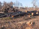Veszélyessé vált a növény? A fakivágás a megoldás!