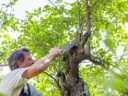 Menthetetlen a fája?