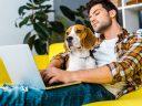 Kutyafelszerelést vásárolna egyszerűen, kényelmesen?
