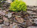 Fenyőkéreggel hatékonyan védheti a növényeit a téli fagytól!