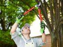 A faápolás nélkülözhetetlen a rendezett környezethez!